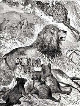 1891 Felidae Family, by Harrison Weir