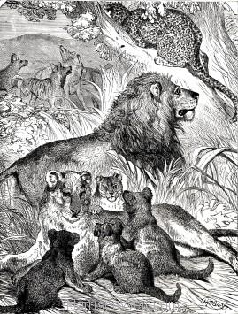 1891 Felidae Family, by Harrison Weir
