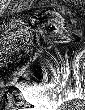 Detail: Hedgehog and Young, by Harrison Weir
