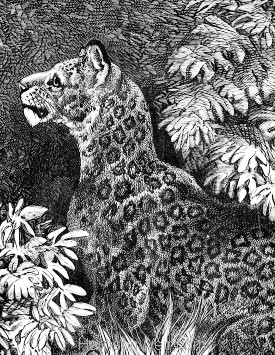 Detail: Jaguar and Young, by Harrison Weir