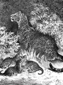 1891 Jaguar and Young, by Harrison Weir