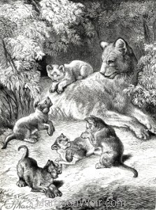 1891 Lioness and Cubs, by Harrison Weir