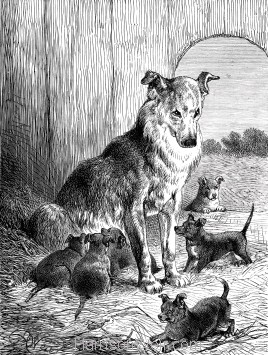 1891 Mother and Pups, by Harrison Weir