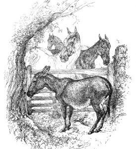 1891 Please open the gate, Neddy. by Harrison Weir