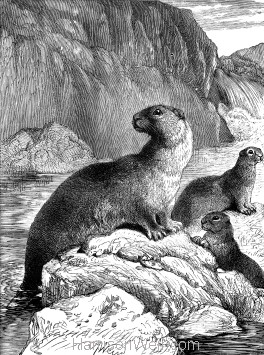 1891 Otter and Young, by Harrison Weir