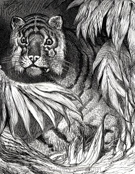 Detail: Tigress and Cubs, by Harrison Weir