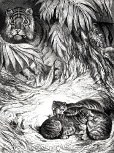 1891 Tigress and Cubs, by Harrison Weir