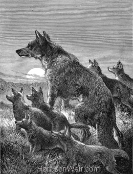 1891 Wolf and Young, by Harrison Weir