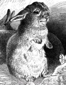 Detail: The Obedient Rabbits, by Harrison Weir