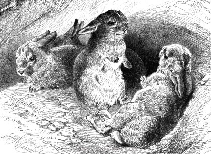 1897 The Obedient Rabbits by Harrison Weir