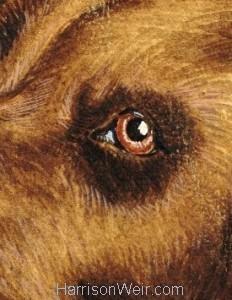 Detail: 1902 Eye of Newfoundland by Harrison Weir