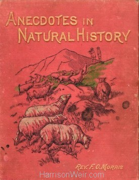 Anecdotes in Natural History