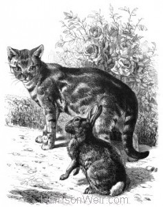 1870 Cat and Leveret by Harrison Weir