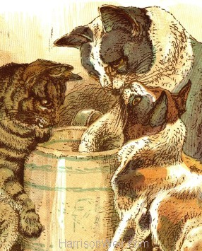 Cat Print Landscape Format