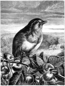 1868 Robin Redbreast by Harrison Weir
