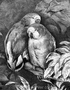 1878 Lovebirds by Harrison Weir