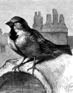 1873 The Sparrow on the Housetop by Harrison Weir