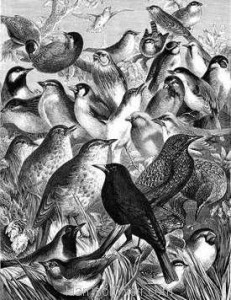 1870 Our Feathered Companions by Harrison Weir