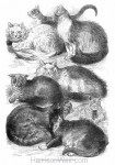 1871 Prize Cats at the Crystal Palace Cat Show drawn by Harrison Weir