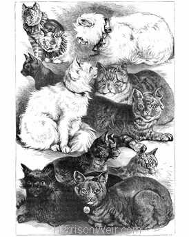 1873 Prize Cats Crystal Palace Cat Show drawn by Harrison Weir