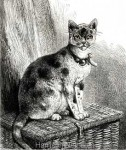 1875 Home from the Cat Show by Harrison Weir