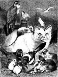 1874 The Family of Love Cat with Rat Guine Pig, Falcon, Canary etc drawn by Harrison Weir
