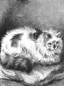 1880 Angora Cat drawn by Harrison Weir