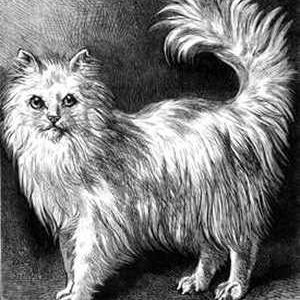 1878 Angora Cat drawn by Harrison Weir