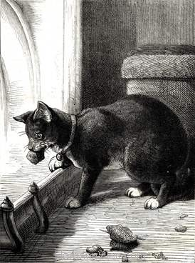 1877 A Clever Cat by Harrison Weir