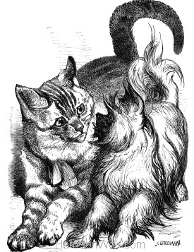 1876 Crib and the Cat, Ben. by Harrison Weir