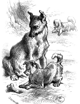 1876 Fly and her Pup with bone, by Harrison Weir