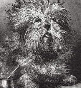 1870 Skye Terrier by Harrison Weir