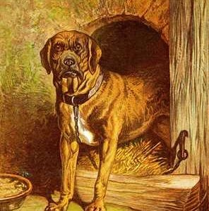 1877 The Farmyard Dog by Harrison Weir