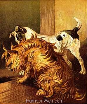 1877 The Terriers by Harrison Weir