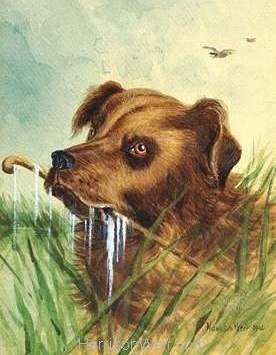 1902 Newfoundland by Harrison Weir
