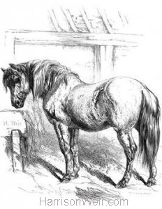 1858 Suffolk Punch by Harrison Weir