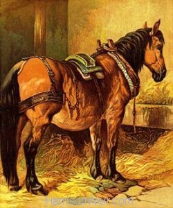 1877 The Horse, by Harrison Weir