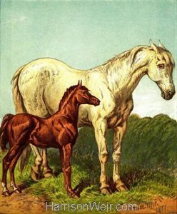 1877 The Foal, by Harrison Weir