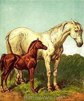 1877 The Foal, by Harrison Weir