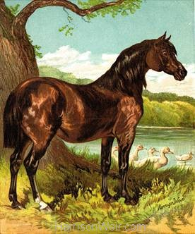 1877 The Pony, by Harrison Weir