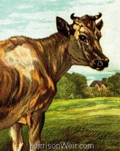 Detail: 1877 The Cow, by Harrison Weir