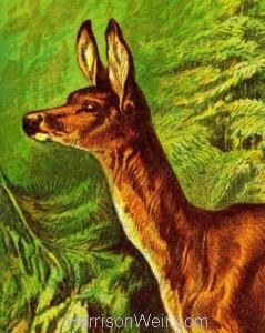 Detail: 1877 - The Deer by Harrison Weir