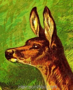 Detail: 1877 The Deer by Harrison Weir