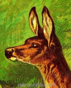Detail: 1877 The Deer by Harrison Weir