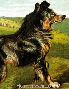 Detail: 1877 The Dog by Harrison Weir