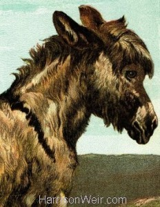 Detail: 1877 The Donkey by Harrison Weir