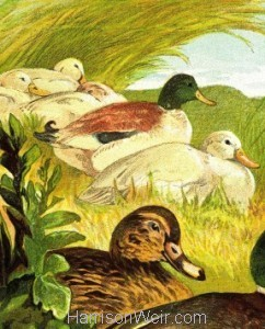 Detail: 1877 Ducks and Drakes by Harrison Weir