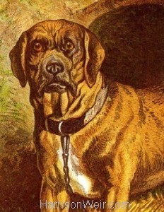 Detail: 1877 The Farmyard Dog by Harrison Weir