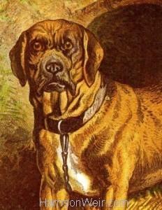 Dog Print Portrait Format