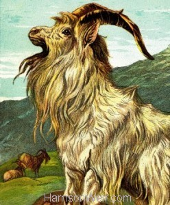 Detail: 1877 The Goat by Harrison Weir